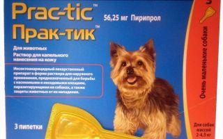 Капли практик для собак от блох и клещей: инструкция по применению и отзывы