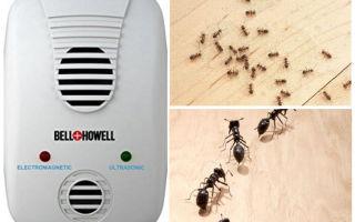 Обзор ультразвуковых отпугивателей муравьев и отзывы
