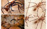 Муравьи убийцы – самые опасные муравьи в мире
