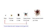 Как размножаются клещи, жизненный цикл клеща