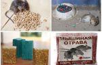 Отрава для мышей в домашних условиях