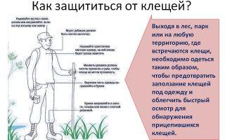 Как защититься от клещей на природе