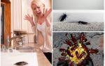Боязнь тараканов – блаттофобия