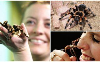 Боязнь пауков – как называется фобия и как от неё избавиться