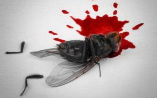 Как убить муху