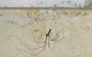 Как избавиться от пауков в квартире или частном доме навсегда