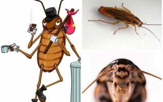 Почему тараканов называют стасиками