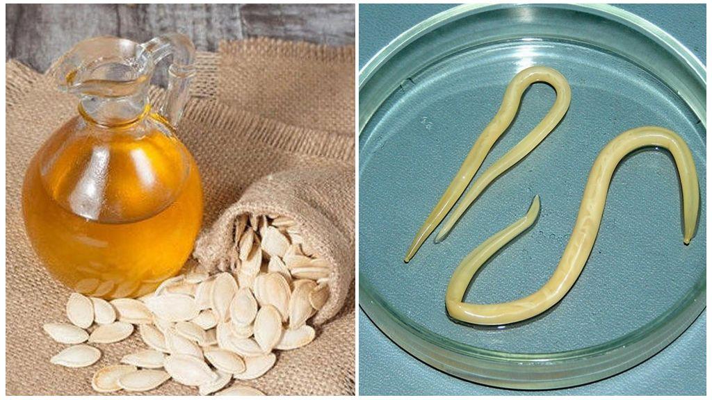 Тыквенное масло от глистов: польза и вред, как принимать