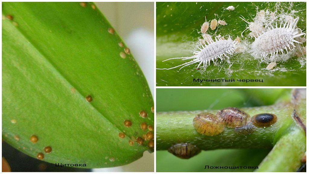 нем на листе орхидеи бегает букашка фото проверки этого