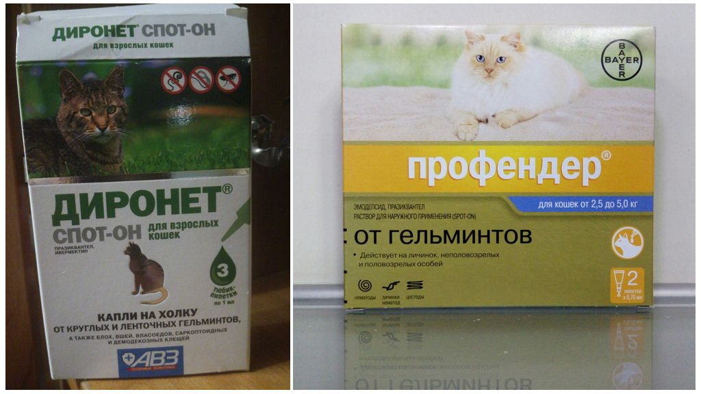 Помогут ли капли на холку избавить кошку от глистов