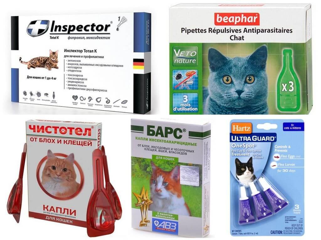 Капли для кошек от блох и глистов