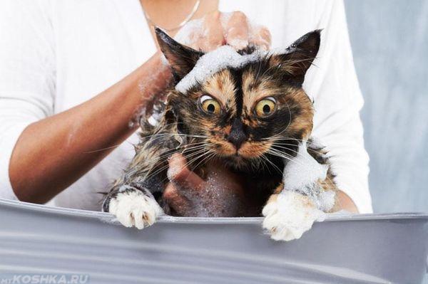 Чем купать кошку от блох
