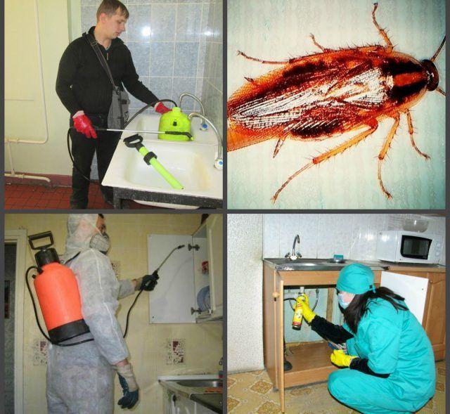 Тараканы в общежитии как избавиться