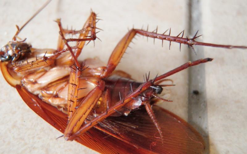 От соседей бегут тараканы: куда жаловаться, что делать