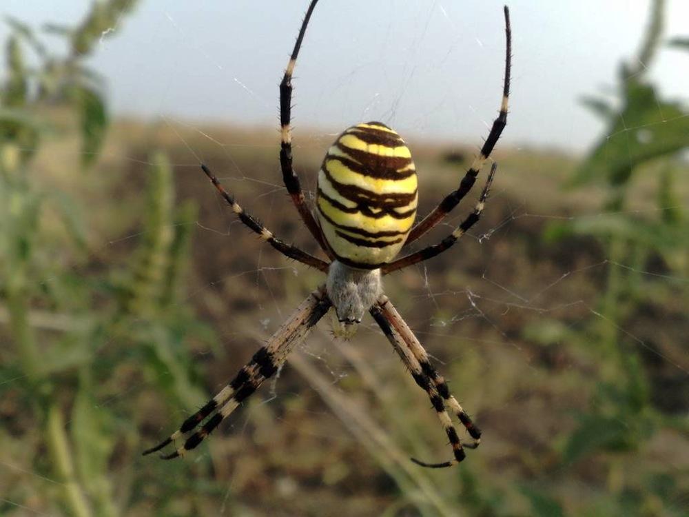 смерть пауки украины фото с названиями жителям живут