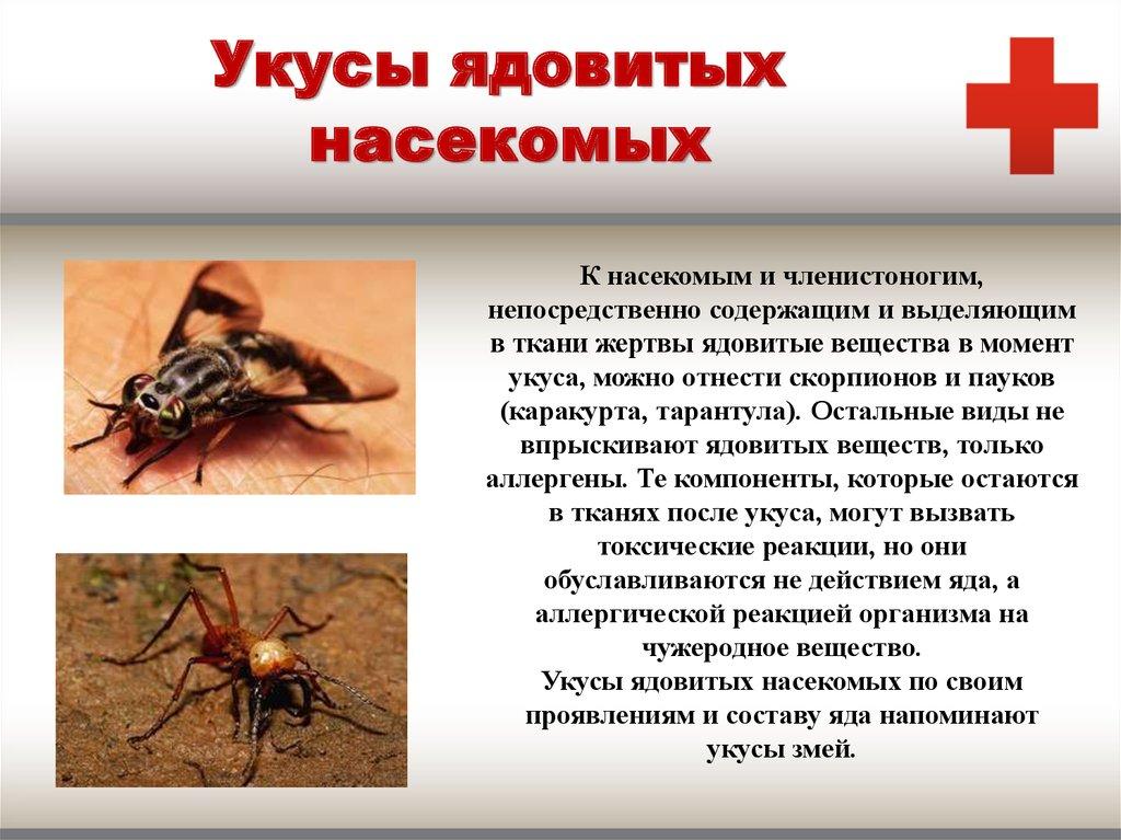 Картинка первая помощь при укусах насекомых