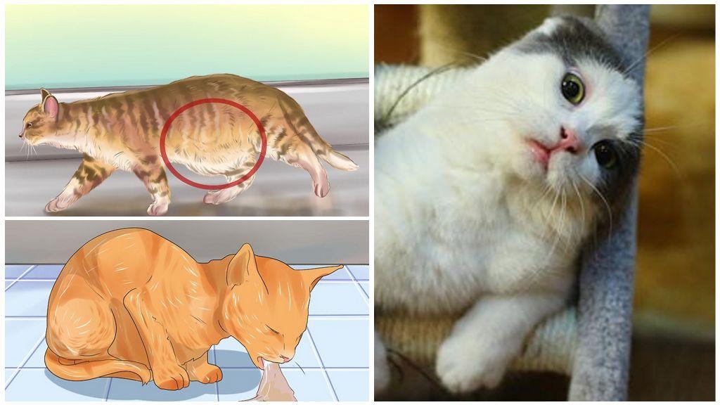 у кошек признаки что глисты